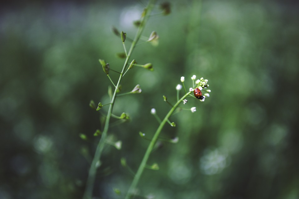 Flowers Little Green Red Plant White Ladybug